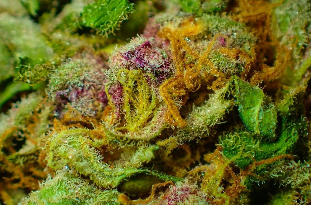The 5 Best Cannabis Strains of 2018